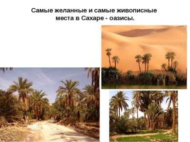 Самые желанные и самые живописные места в Сахаре - оазисы.