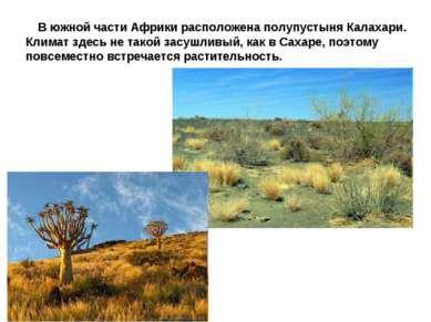 В южной части Африки расположена полупустыня Калахари. Климат здесь не такой ...