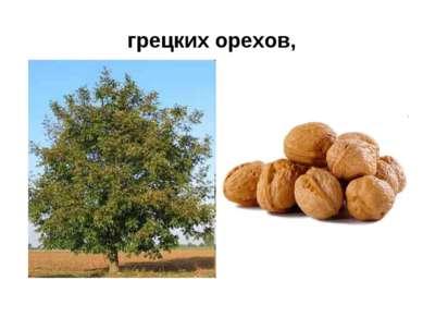 грецких орехов,