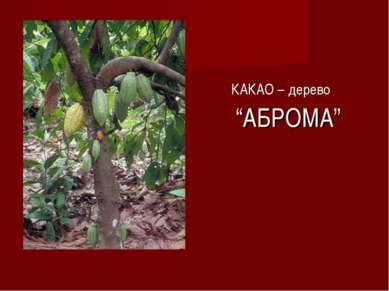 "КАКАО – дерево ""АБРОМА"""