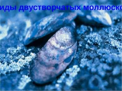 Виды двустворчатых моллюсков