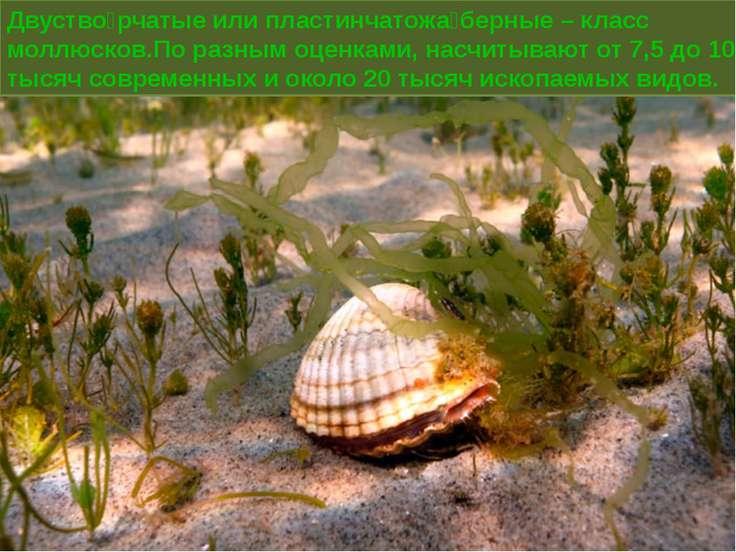 Двуство рчатые или пластинчатожа берные – класс моллюсков.По разным оценками,...