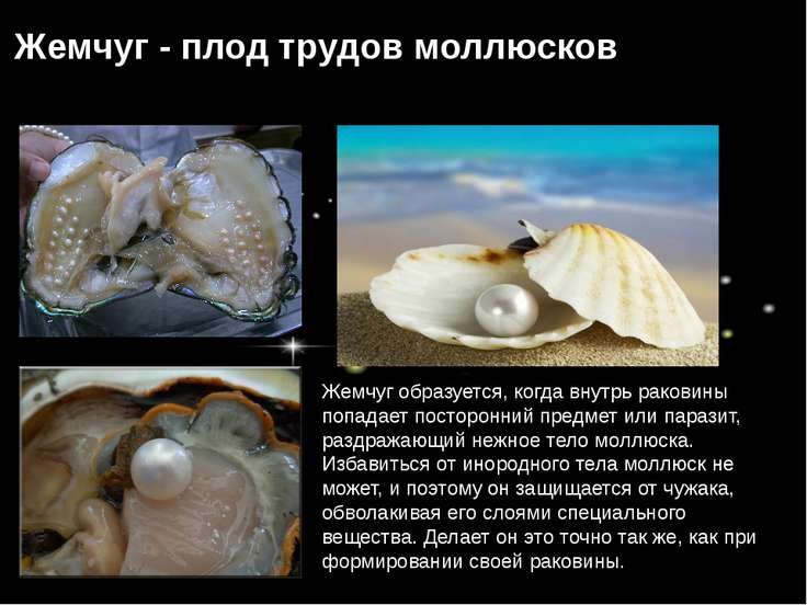 Жемчуг образуется, когда внутрь раковины попадает посторонний предмет или пар...