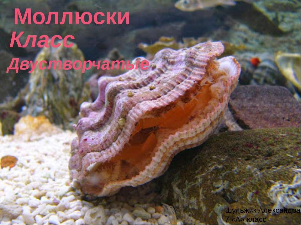Презентация Классы Моллюсков Биология 7 Класс