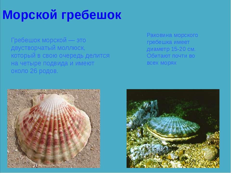 Морской гребешок Гребешок морской — это двустворчатый моллюск, который в свою...
