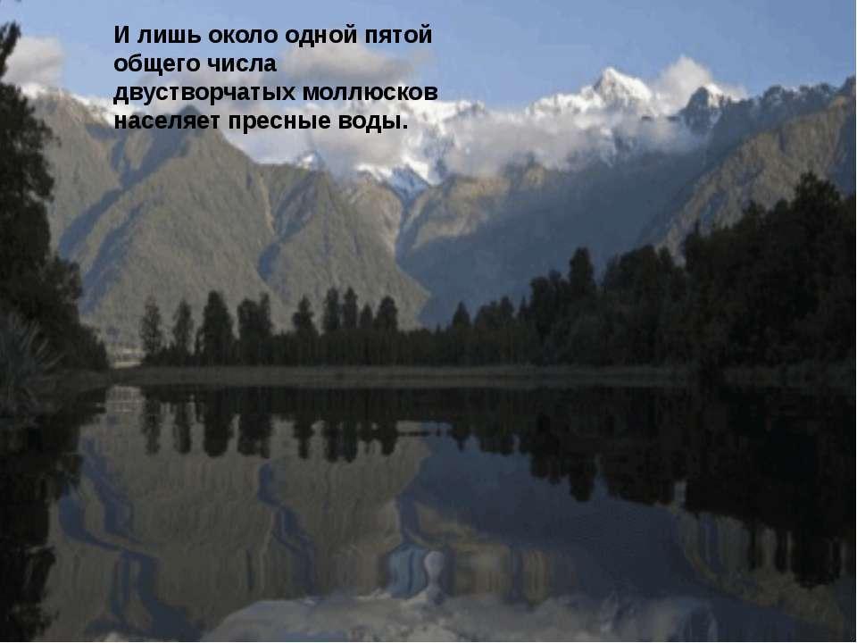 Место обитания двустворчатых моллюсков Общее количество видов двустворчатых с...