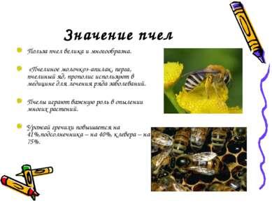Значение пчел Польза пчел велика и многообразна. «Пчелиное молочко»-апилак, п...