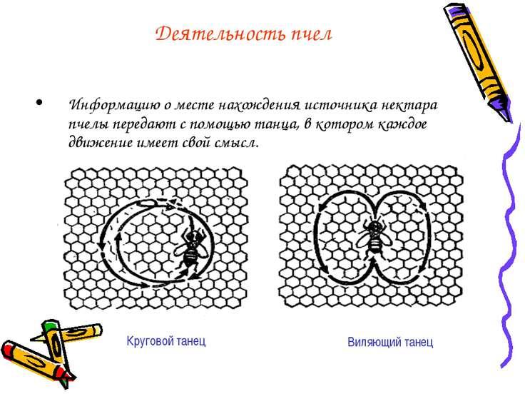 Деятельность пчел Информацию о месте нахождения источника нектара пчелы перед...