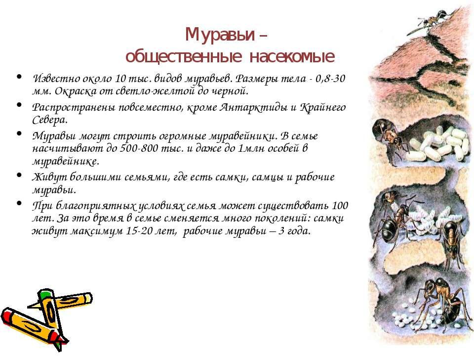Муравьи – общественные насекомые Известно около 10 тыс. видов муравьев. Разме...
