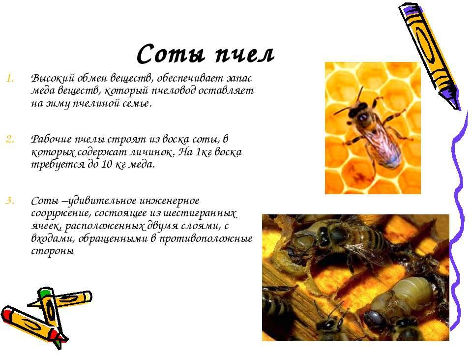 Соты пчел Высокий обмен веществ, обеспечивает запас меда веществ, который пче...