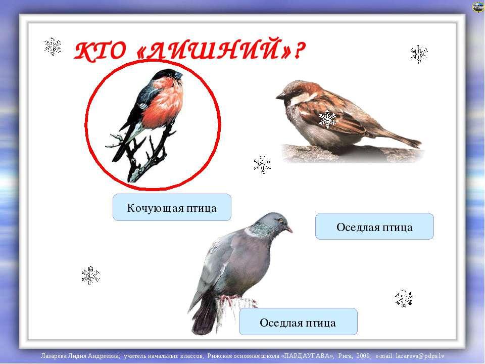 КТО «ЛИШНИЙ»? Кочующая птица Оседлая птица Оседлая птица Лазарева Лидия Андре...