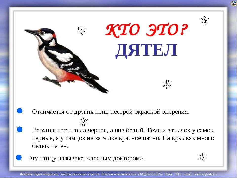 ДЯТЕЛ Отличается от других птиц пестрой окраской оперения. Верхняя часть тела...