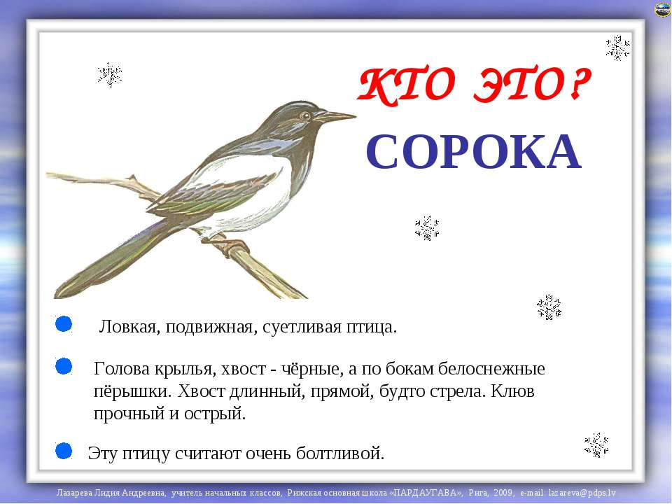 СОРОКА Голова крылья, хвост - чёрные, а по бокам белоснежные пёрышки. Хвост д...