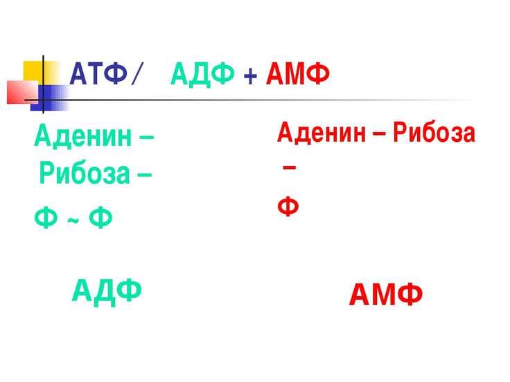 АТФ ← АДФ + АМФ Аденин – Рибоза – Ф ~ Ф Аденин – Рибоза – Ф АДФ АМФ