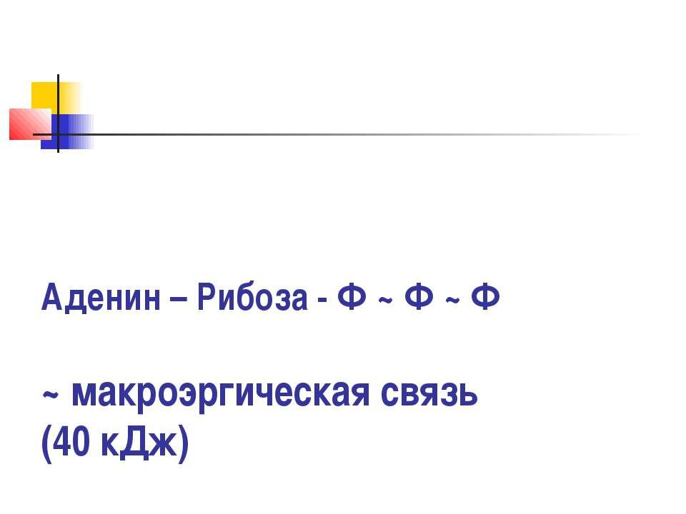 Аденин – Рибоза - Ф ~ Ф ~ Ф ~ макроэргическая связь (40 кДж)
