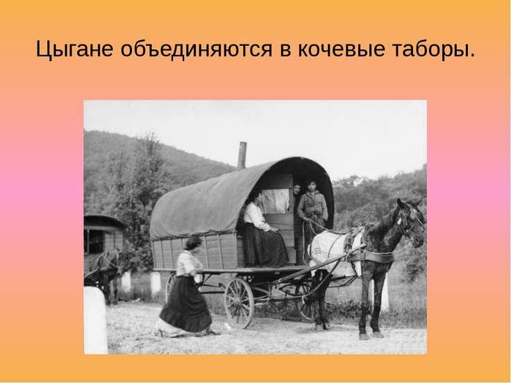 Цыгане объединяются в кочевые таборы.