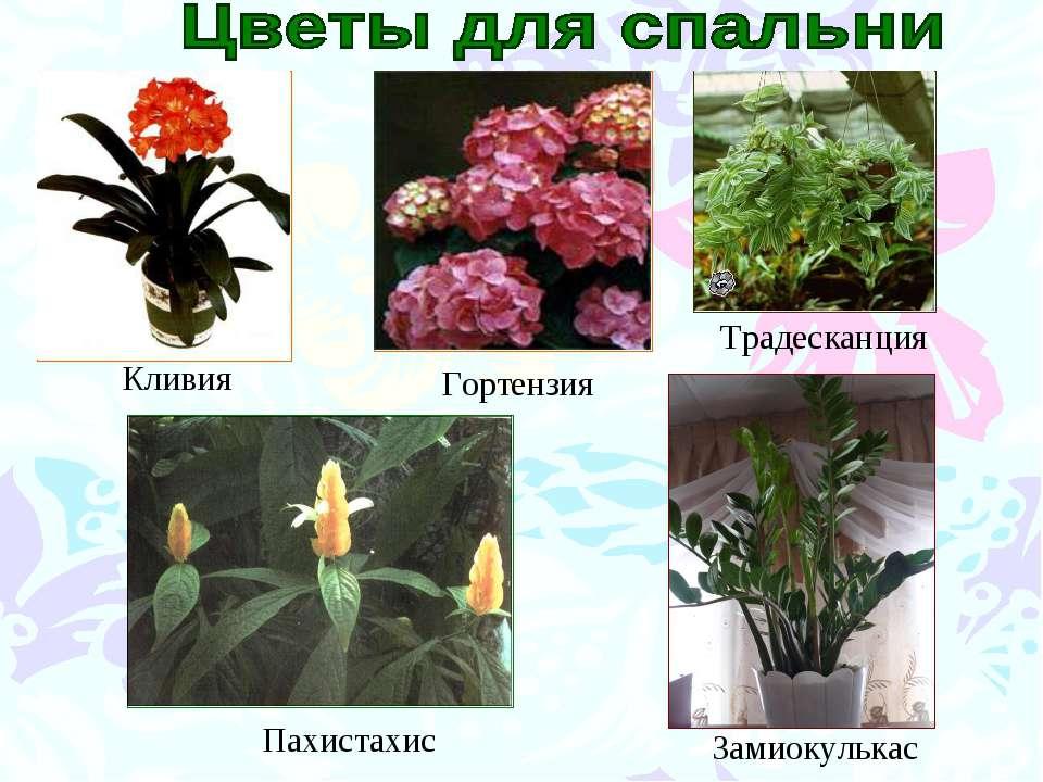 http://uslide.ru/images/3/9277/960/img15.jpg