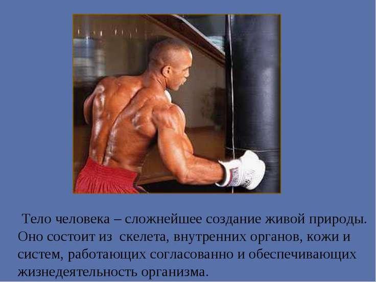 Тело человека – сложнейшее создание живой природы. Оно состоит из скелета, вн...