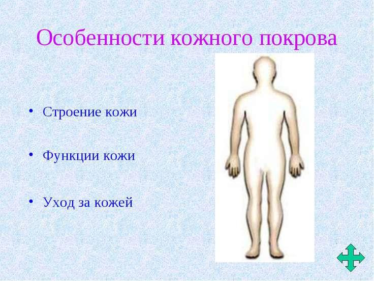 Особенности кожного покрова Строение кожи Уход за кожей Функции кожи