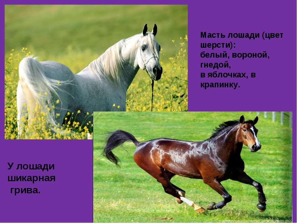 Масть лошади (цвет шерсти): белый, вороной, гнедой, в яблочках, в крапинку. У...
