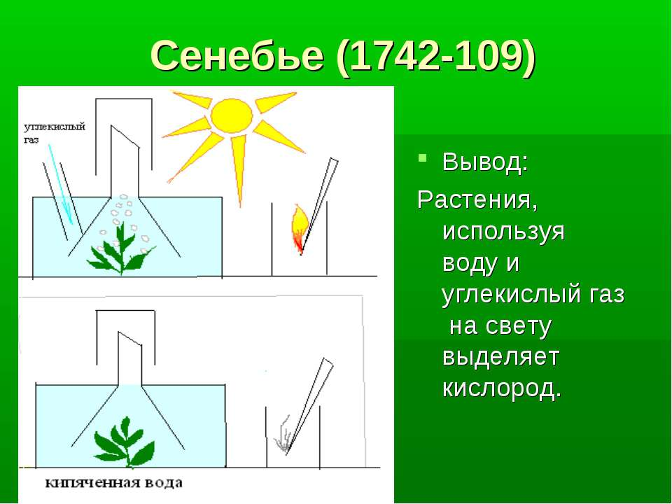 Сенебье (1742-109) Вывод: Растения, используя воду и углекислый газ на свету ...