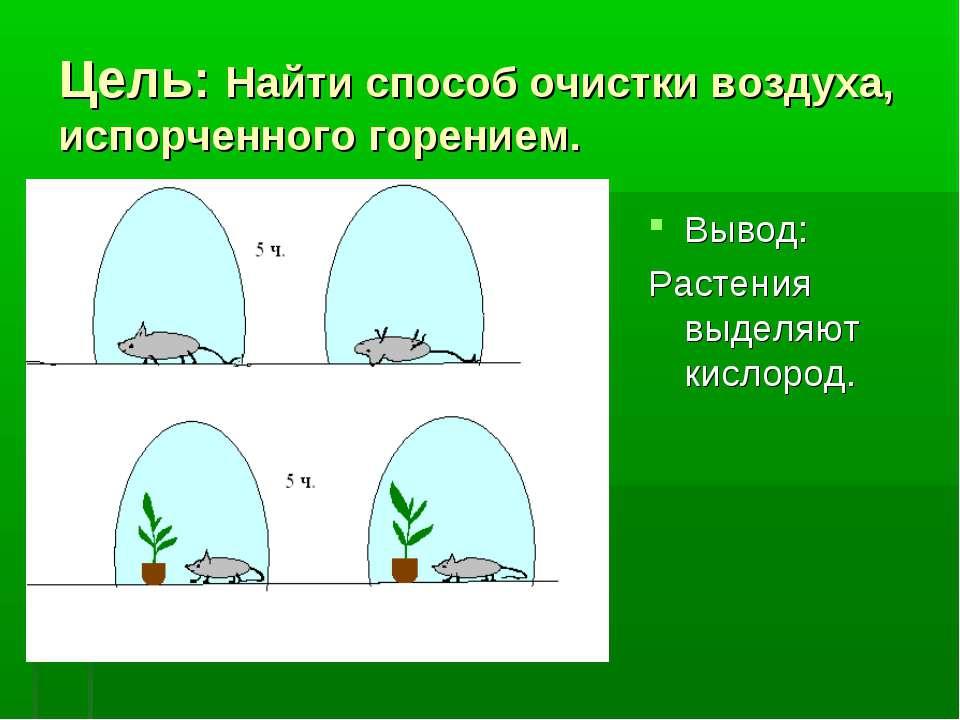 Цель: Найти способ очистки воздуха, испорченного горением. Вывод: Растения вы...