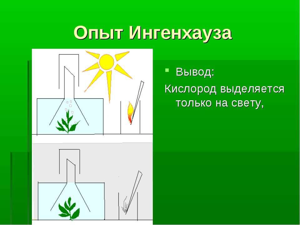 Опыт Ингенхауза Вывод: Кислород выделяется только на свету,