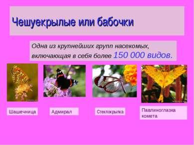 Чешуекрылые или бабочки Одна из крупнейших групп насекомых, включающая в себя...