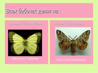 Всех бабочек делят на : дневных (булавоусых) ночных (разноусых) Березовый шел...