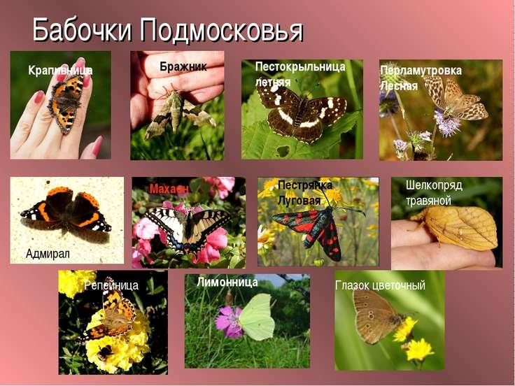 Бабочки Подмосковья Глазок цветочный Крапивница Репейница Адмирал Пестокрыльн...