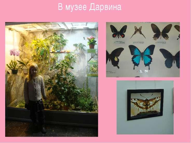 В музее Дарвина