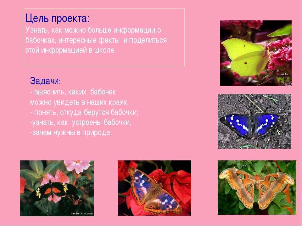 Цель проекта: Узнать, как можно больше информации о бабочках, интересные факт...