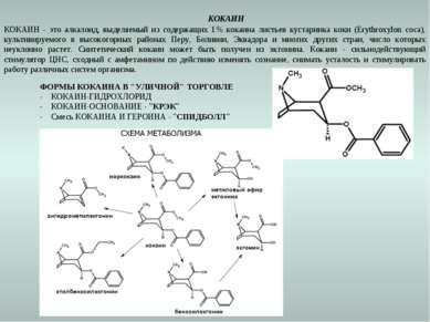 КОКАИН КОКАИН - это алкалоид, выделяемый из содержащих 1% кокаина листьев кус...