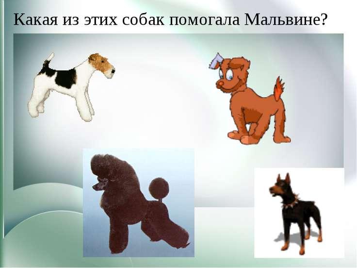Какая из этих собак помогала Мальвине?