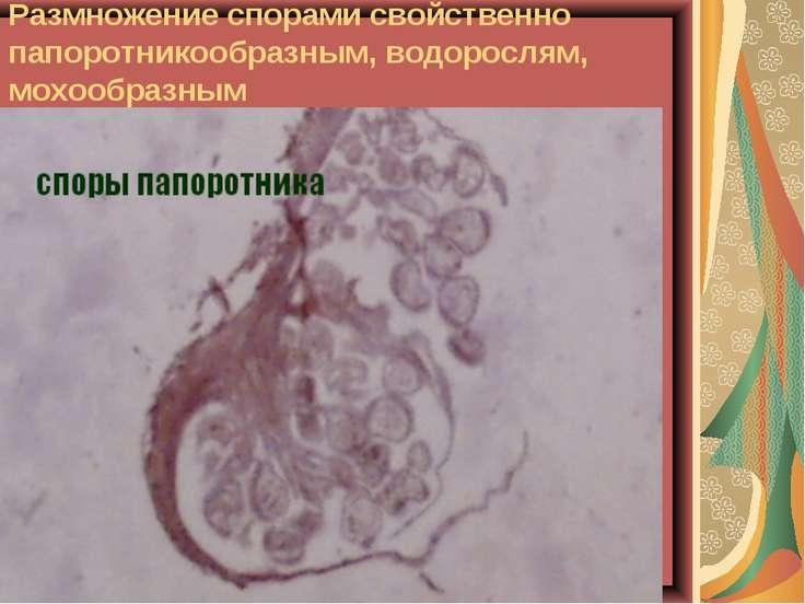 Размножение спорами свойственно папоротникообразным, водорослям, мохообразным