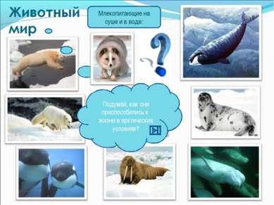 Млекопитающие на суше и в воде: Подумай, как они приспособились к жизни в арк...
