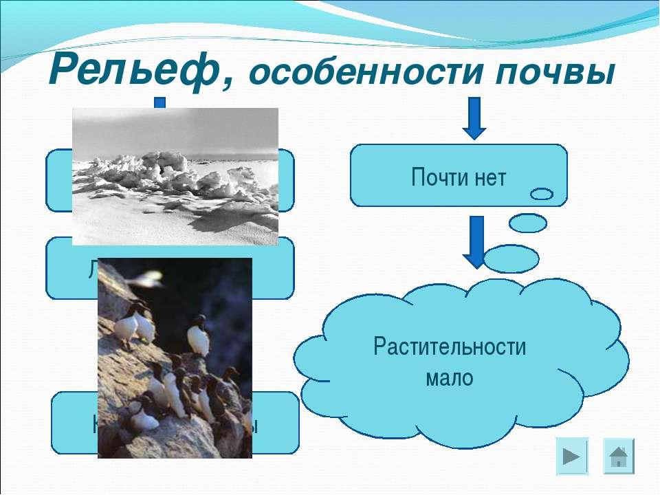 Рельеф, особенности почвы Каменные скалы Ледяные торосы Снежные равнины Почти...