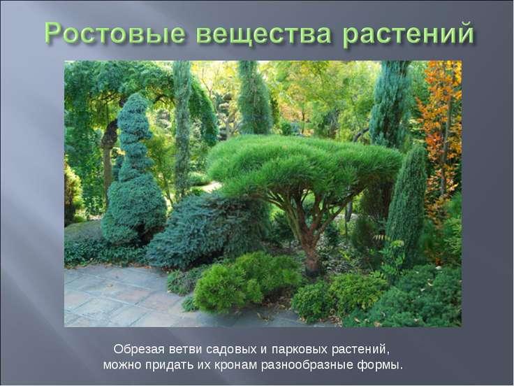Обрезая ветви садовых и парковых растений, можно придать их кронам разнообраз...