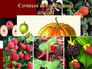 Сочные ягодовидные плоды