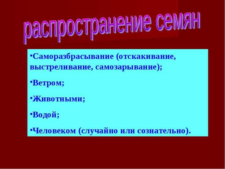 Саморазбрасывание (отскакивание, выстреливание, самозарывание); Ветром; Живот...