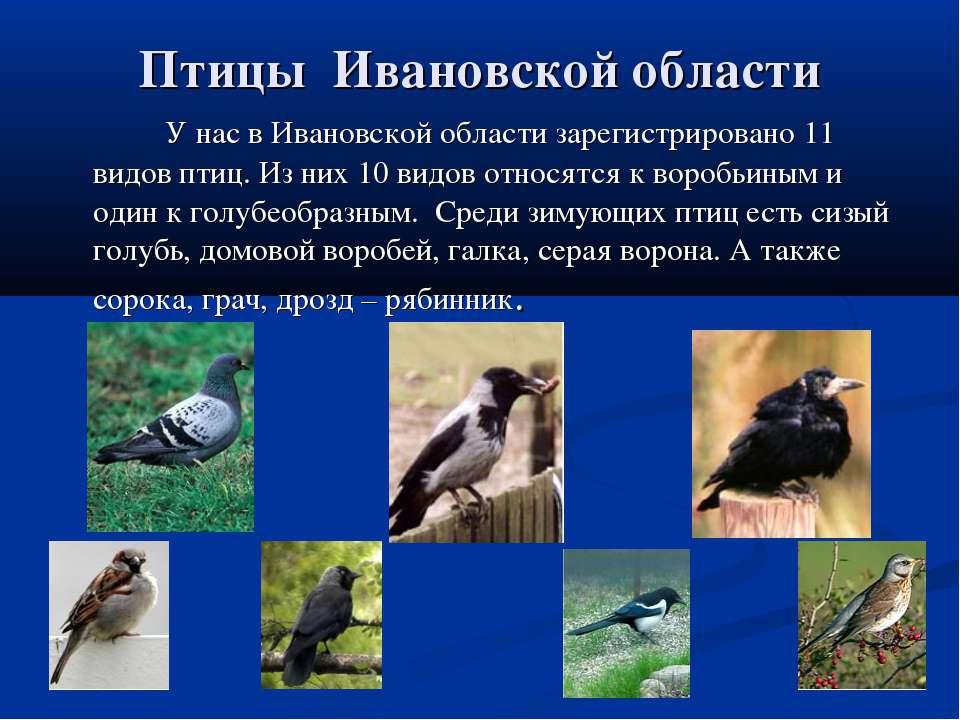 Птицы Ивановской области У нас в Ивановской области зарегистрировано 11 видов...