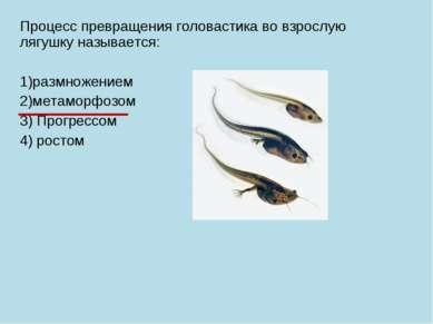 Процесс превращения головастика во взрослую лягушку называется: 1)размножение...