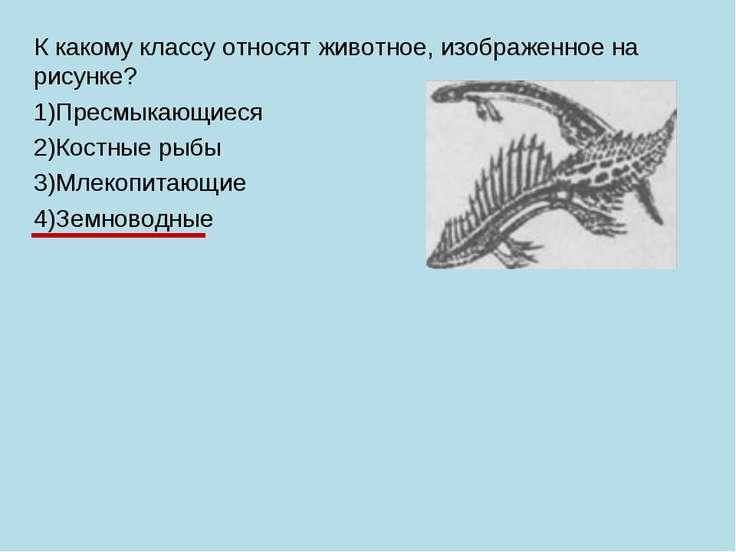 К какому классу относят животное, изображенное на рисунке? 1)Пресмыкающиеся 2...