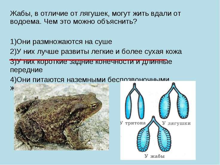 Жабы, в отличие от лягушек, могут жить вдали от водоема. Чем это можно объясн...