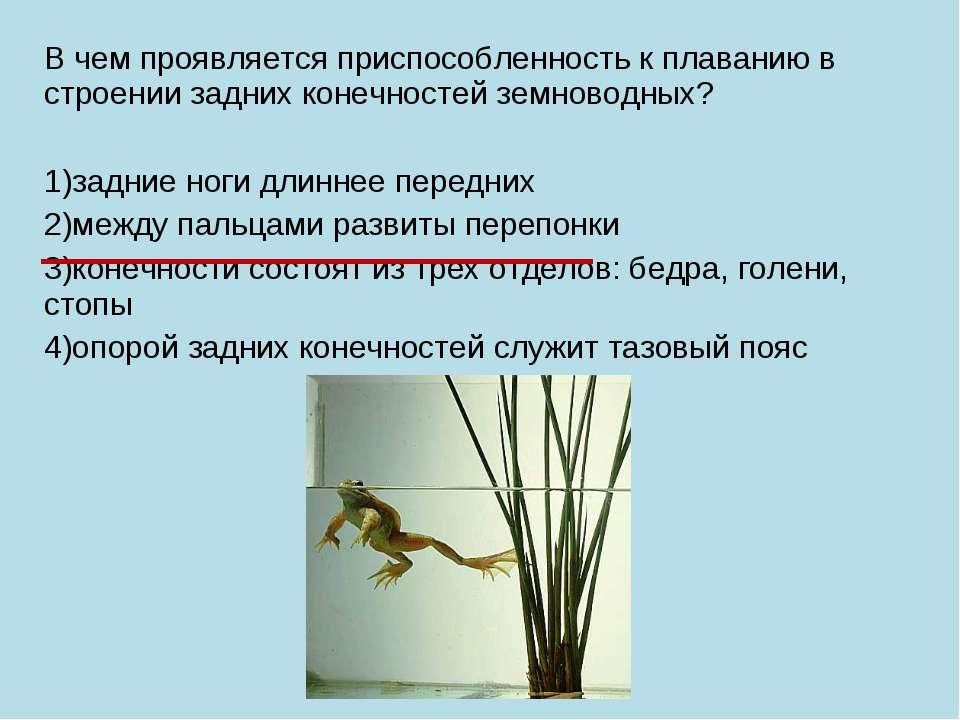 В чем проявляется приспособленность к плаванию в строении задних конечностей ...