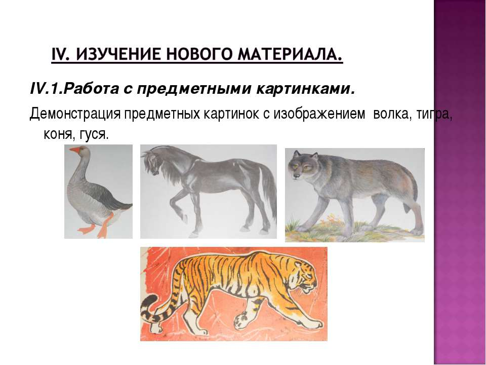 IV.1.Работа с предметными картинками. Демонстрация предметных картинок с изоб...
