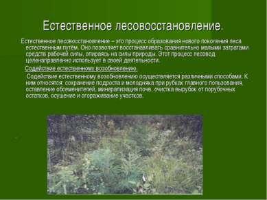 Естественное лесовосстановление. Естественное лесовосстановление – это процес...