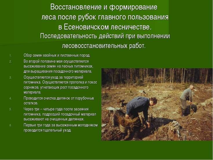 Восстановление и формирование леса после рубок главного пользования в Есенови...