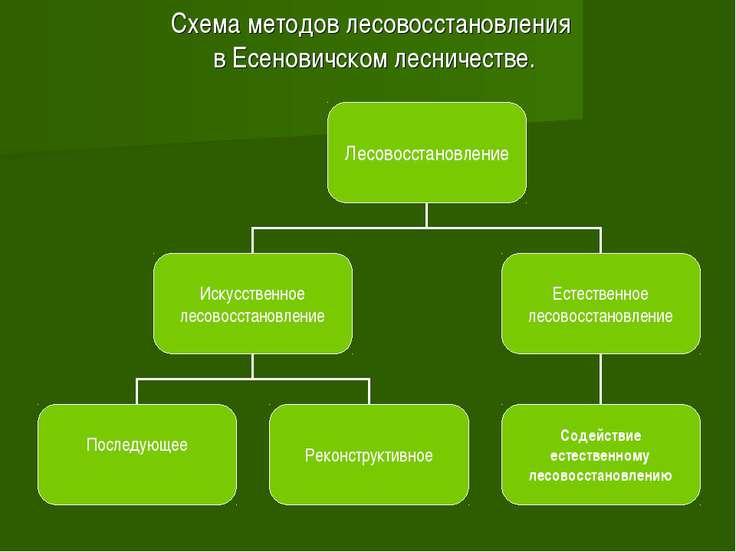 Схема методов лесовосстановления в Есеновичском лесничестве.