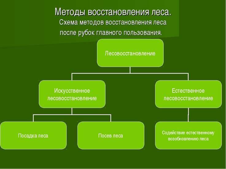 Методы восстановления леса. Схема методов восстановления леса после рубок гла...